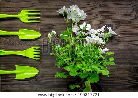 green garden tools for planting flowers at home on wooden table background top view