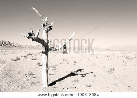 In Iran Old Dead Tree