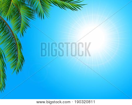 View of a Tropical Sunny Blue Sky Landscape with Palm Tree