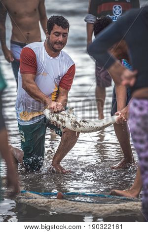 Ilha Do Mel Paraná Brazil - June 3 2017: Native fishermen from Ilha do Mel (Honey Island) pulling the net with fish for the Feast of the Mullet.
