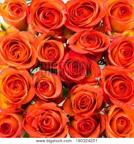 Beautiful red roses background view from above