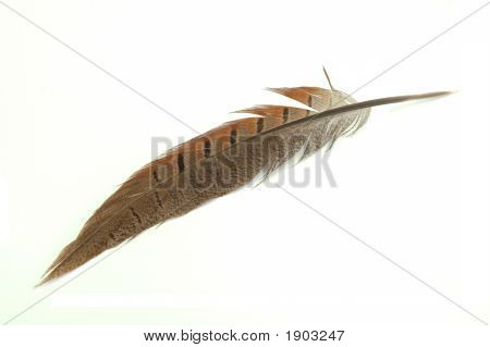 Feather, Isolated