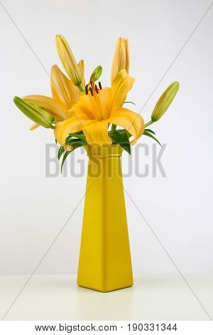 Yellow lily in  yellow vase on whte background