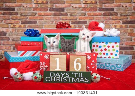 Two fluffy white and one gray kitten popping out of a pile of presents small santa hats toy mice and count down to Christmas blocks. Red fuzzy carpet brick wall background. 16 days til Christmas