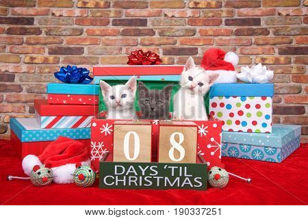 Two fluffy white and one gray kitten popping out of a pile of presents small santa hats toy mice and count down to Christmas blocks. Red fuzzy carpet brick wall background. 08