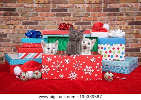 Two fluffy white and one gray kitten popping out of a pile of presents small santa hats toy mice on red fuzzy carpet with brick wall background