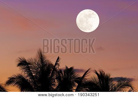 Silhouette of coconut trees with supermoon night sky background.
