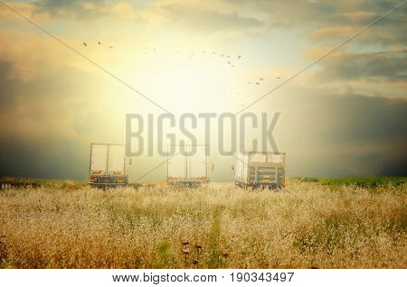 Three white cargo trucks are flooded by sunset light. Cars are parked in countryside field. A flock of birds flies in dramatic cloudy sky over the land. High yellow grass is in the foreground. Horizontal shot