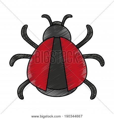 black and red bug doodle over white background vector illustration design
