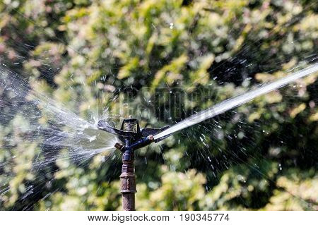 water sprinkler in action. sprayed water from sprinkler. equipment for watering garden.