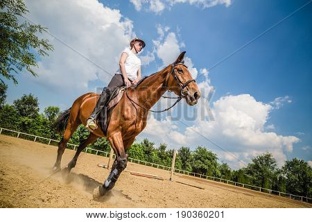 Portrait of woman riding a horse. Equitation in countryside