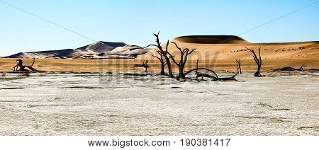 The scenic Sossusvlei and Deadvlei. Large clay and salt pan with braided Acacia trees surrounded by majestic sand dunes. Namib Naukluft National Park.