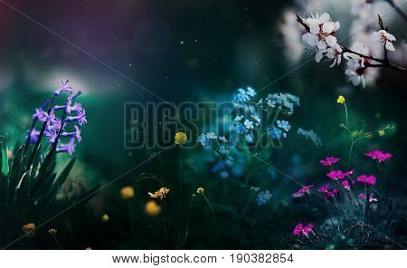 Set of flowers: Myosotis Dianthus cherry flower and Ranunculus acris on a bokeh background. Concept: flower background.