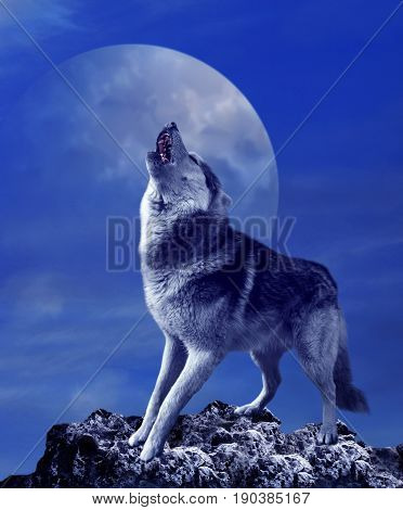 A howling wolf against the background of the night sky with the moon