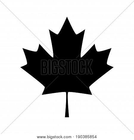 Maple leaf. Canada symbol maple leaf, vector