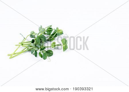 Heap of green pea sprouts, micro greens on white background. Healthy eating concept of fresh garden produce organically grown as a symbol of health and vitamins from nature. Microgreens closeup