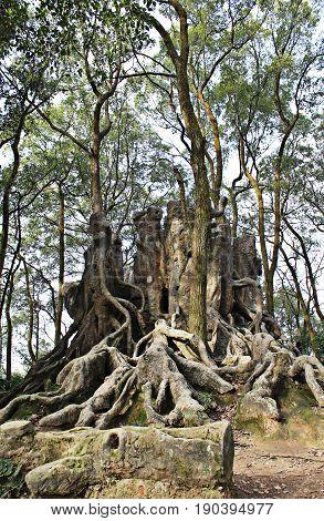 A castle of roots; a strange sculpture.
