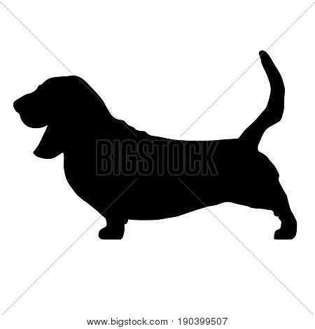 black dog breed Basset hound isolated.  Dog breed vector black silhouette