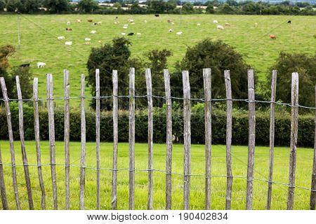 Wooden Fence, Ireland