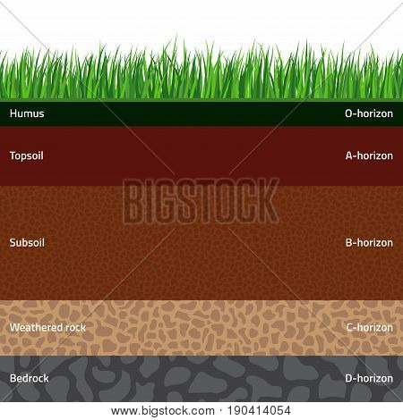 Seamless named soil layers with green grass. The stratum of organic minerals sand clay silt parent rock and unweathered parent material.