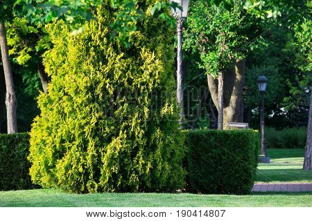 park, surrounded by a beautiful green landscape with thuja and lantern