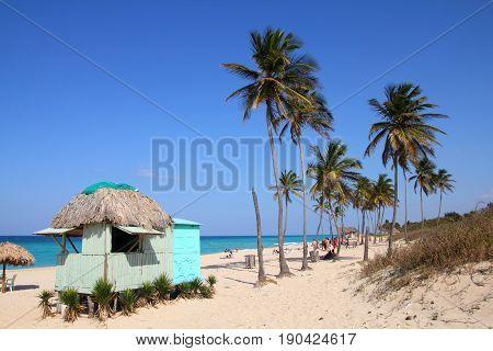 Cuba Beach Palm Trees