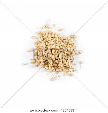 Heap of germinated buckwheat, micro greens on white background. Healthy eating concept of fresh garden produce organically grown as a symbol of health and vitamins from nature. Microgreens closeup
