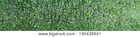 Panoramic View Of A Bright Green Grass Photograph