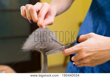 Cat Grooming In Pet Beauty Salon.