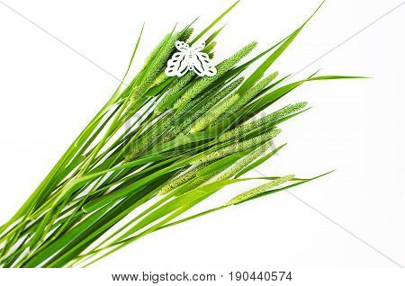 Green Grass Timothy-grass On A White Background