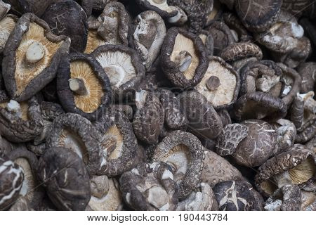 Shiitake mushroom is a highly nutritious food. And a mixture of traditional medicine.
