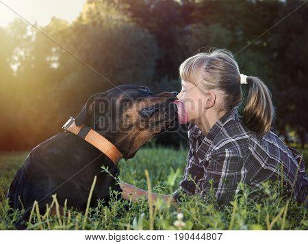 Huge dog licks a baby's face. Rottweiler and little girl on green grass