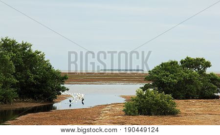 View on seashore in Everglade National Park, Florida, with white herons