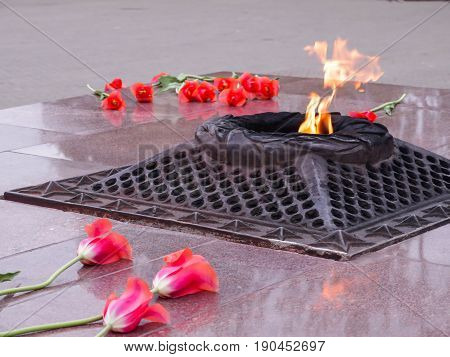 Red tulips near the eternal flame in memory of victims in the great Patriotic war.
