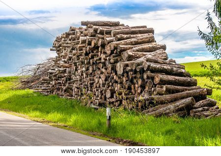 Wooden Logs Of Pine Woods In The Forest, Stacked In A Pile In Dolomites. Freshly Chopped Tree Logs S