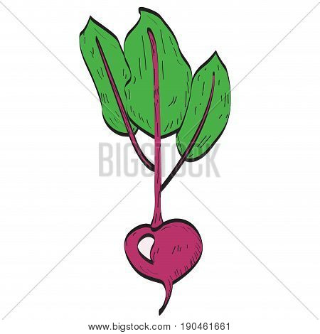 Isolated beet on a white background, Vector illustration