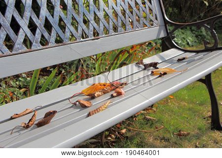Dead leaves on a bench in a garden