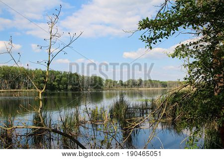A pond in the nature reserve, nature, Germany