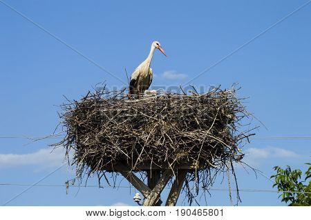 Stork's nest, natural stork's nest, puppies and stork's nest, stork pictures on the roof,