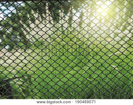 Wired fence with green grass flower and sunlight background.