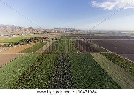 Aerial view of farm field row crops near Camarillo in Ventura County, California.