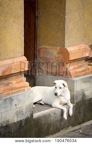 Dog in a doorway