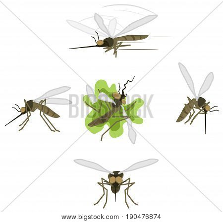 Mosquito cartoon character actions icon set vector illustration isolated over white