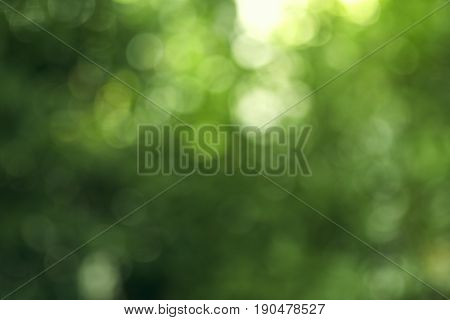 green bokeh background with circles. Summer abstract theme