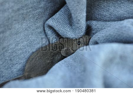 The shy mouse tucked away in textile