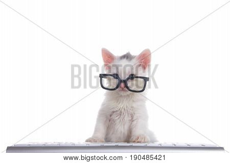 One cute adorable fluffy white kitten wearing black geeky glasses looking over the glasses slightly to viewers left sitting in front of a computer keyboard isolated on white background.