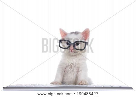 One cute adorable fluffy white kitten wearing black geeky glasses looking slightly to viewers left sitting in front of a computer keyboard isolated on white background.