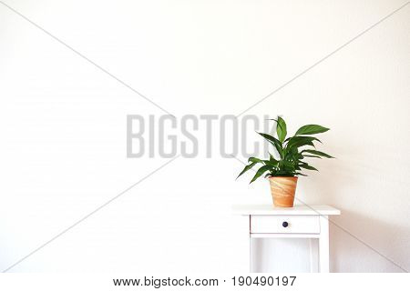 Modern clean interior with stand and plant on empty white wall background, place for your text