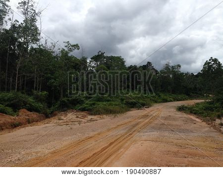 The main road of timber company with tire print in East Kalimantan, the road to the forest