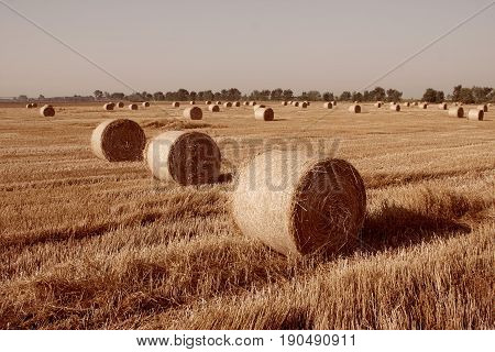 Haystacks straw left after harvesting wheat Field Landscape with Rolls and Sky Agriculture Concept